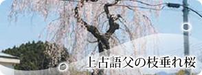 Kamikogobu的垂枝樱树